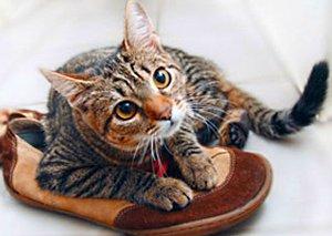 Как убрать запах кошачей мочи из обуви