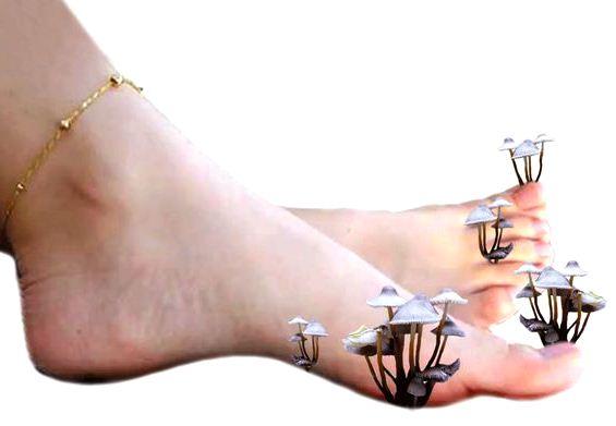 Грибок ногтей передача елены малышевой