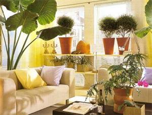 Как расположить комнатные растения в дома