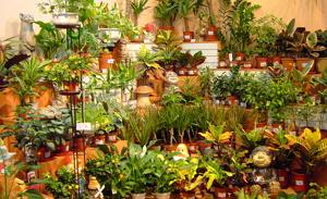 Как выбрать растение для дома