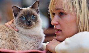 Домашний питомец кошка - что нужно знать