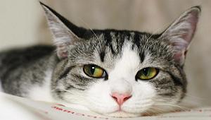 Кошка в доме - польза и вред