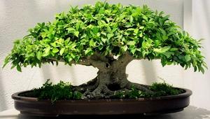 Для чего нужны растения в доме