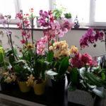 Как заставить орхидею цвести в домашних условиях длительное время
